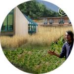 crop-Stromenland